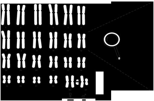 http://www.chromosomewalk.ch/wp-content/uploads/le_genome_humain-1-final-en.png